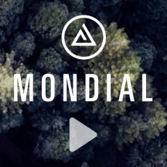 Mondial - Game Changer in Action
